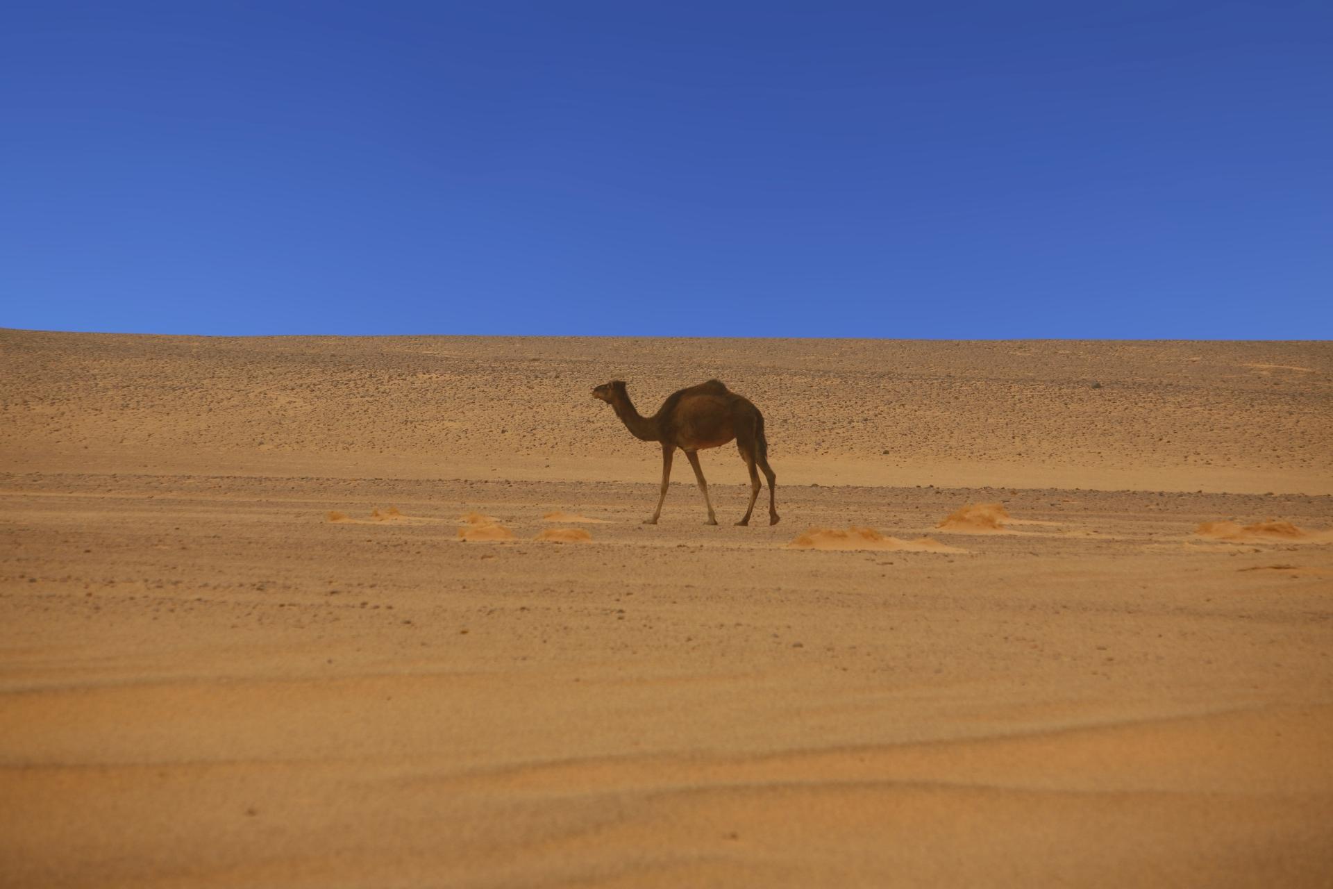 Libya 2007 # 03