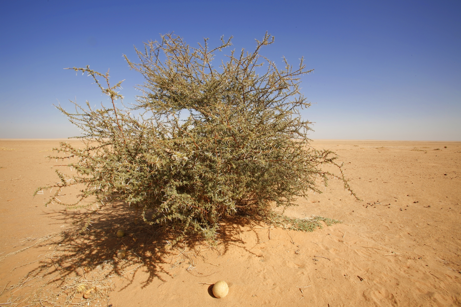 Libya 2007 # 05